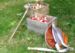 maher_apple_1